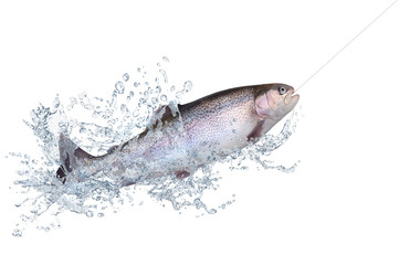 Fische 125