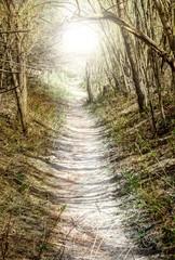 Waldweg ins Licht