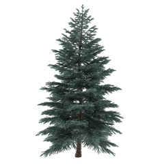 Tree isolated. Pinus sylvestris
