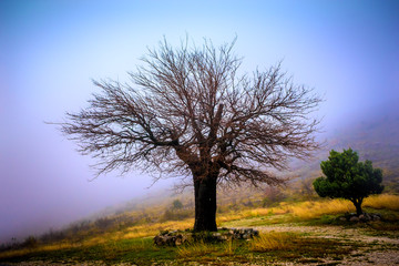 Abandoned and lonely tree in mountains shrouded in mist