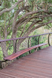 Bench on the Kirstenbosch Tree Canopy Walkway poster