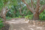 Walkway and bench in the  Kirstenbosch National Botanical Garden poster