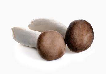 King Oyster mushroom (Eringi) isolated on white backgroud.