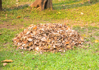 Pile of dry leaf was collect by gardener for make  fertilizer