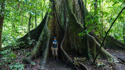 Ceibo tree trunk