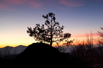 pine tree on rock silhouette