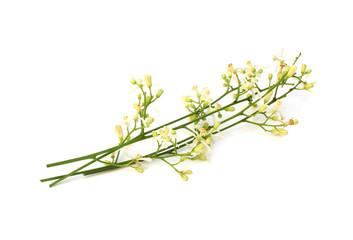 Medicinal Neem Flower