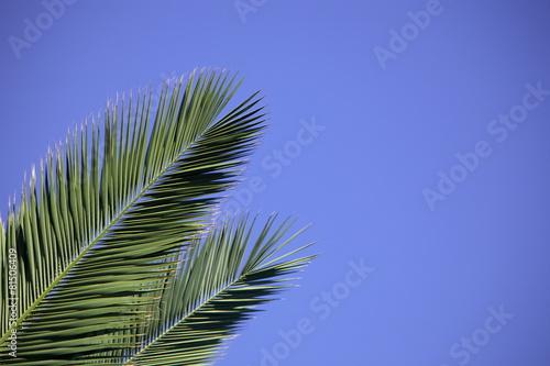 Fotobehang Palm boom Palm leaves