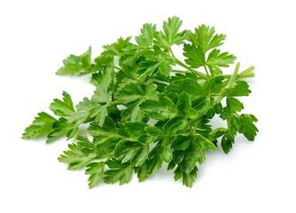 Sweet parsley herbs