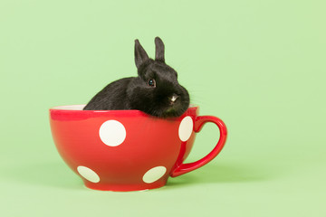 Rabbit in funny big cup