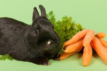 Rabbit with fresh carrots