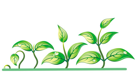 Progression of seedling growth