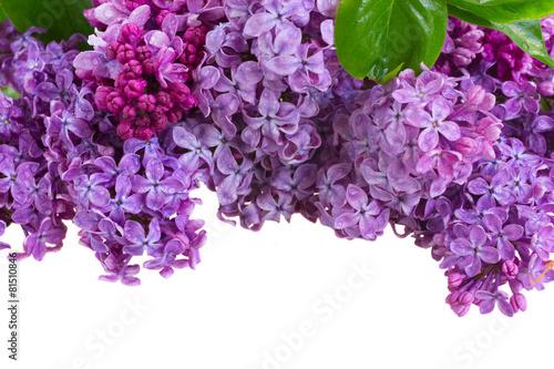 Plexiglas Lilac Lilac flowers