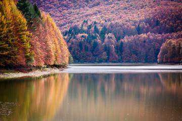 Reflejos de árboles en embalse de Irabia en otoño
