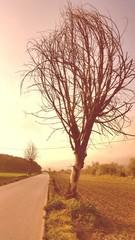 Dry tree field