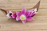 Tulpe in einer Palmblattschale - 81531244