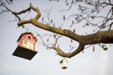 Vogelhäuser am Geäst