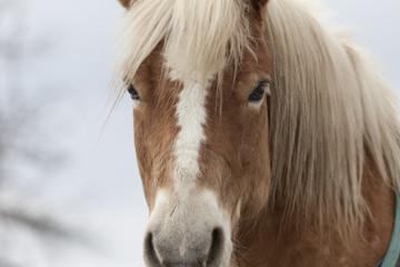 Pferdekopf III