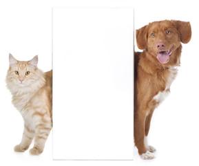 Hund und Katze hinter weißer Wand