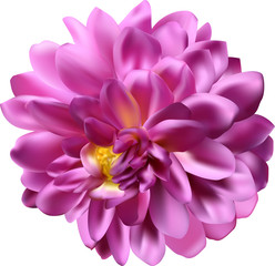 pink bloom with lot of petals