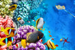 Underwater world with corals and tropical fish. - 81535224