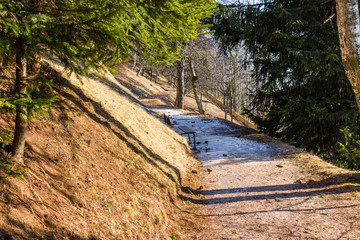 footpath in pine forest on Dolomites mountains