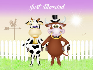 marriage between cow and bull