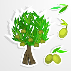 tree  on paper. Olive oil. Vector  olive tree.