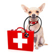 medical doctor dog - 81538893