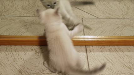 Kitten Fights Mirror Image