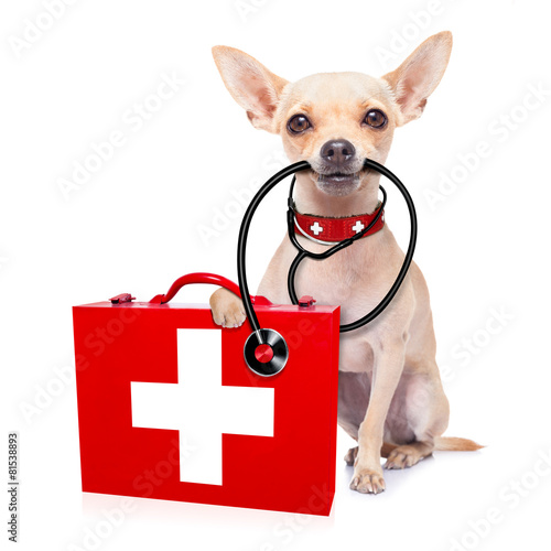 Leinwandbild Motiv medical doctor dog