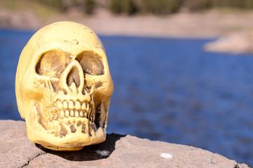 Abandoned Human Skull