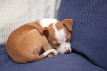 il sonno del cucciolo