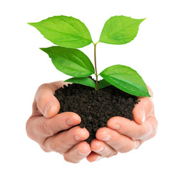Hands holding green plant isolated