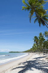 Remote Tropical Brazilian Beach Palm Trees