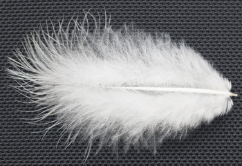 white air feather on a black background