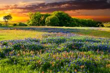 "Постер, картина, фотообои ""Texas Wildflowers"""