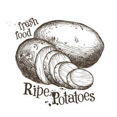 ripe potatoes vector logo design template. fresh vegetables