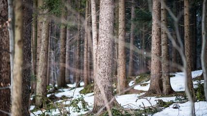 Bäume-1