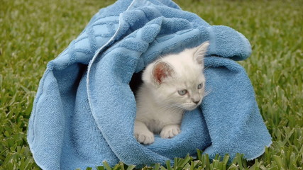 Kitten Wrapped in Towel