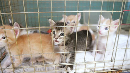 Kittens in a Shelter Cage