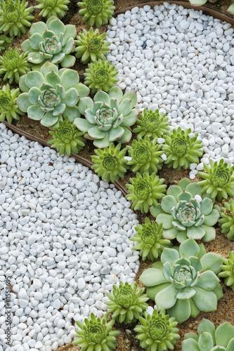 Papiers peints Cactus succulent plant