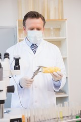 Food scientist measuring corn