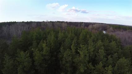 Aerial shot flight above the green coniferous forest