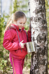 little girl collects birch sap in woods