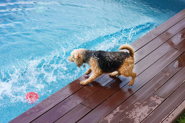 Dog Training -  Keeping a dog out of the pool