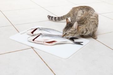 Cat wishing fish