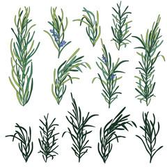 Rosemary herb set