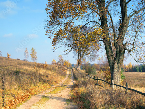 rural road with old tree - 81564420