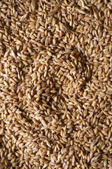 Closeup of grains of wheat